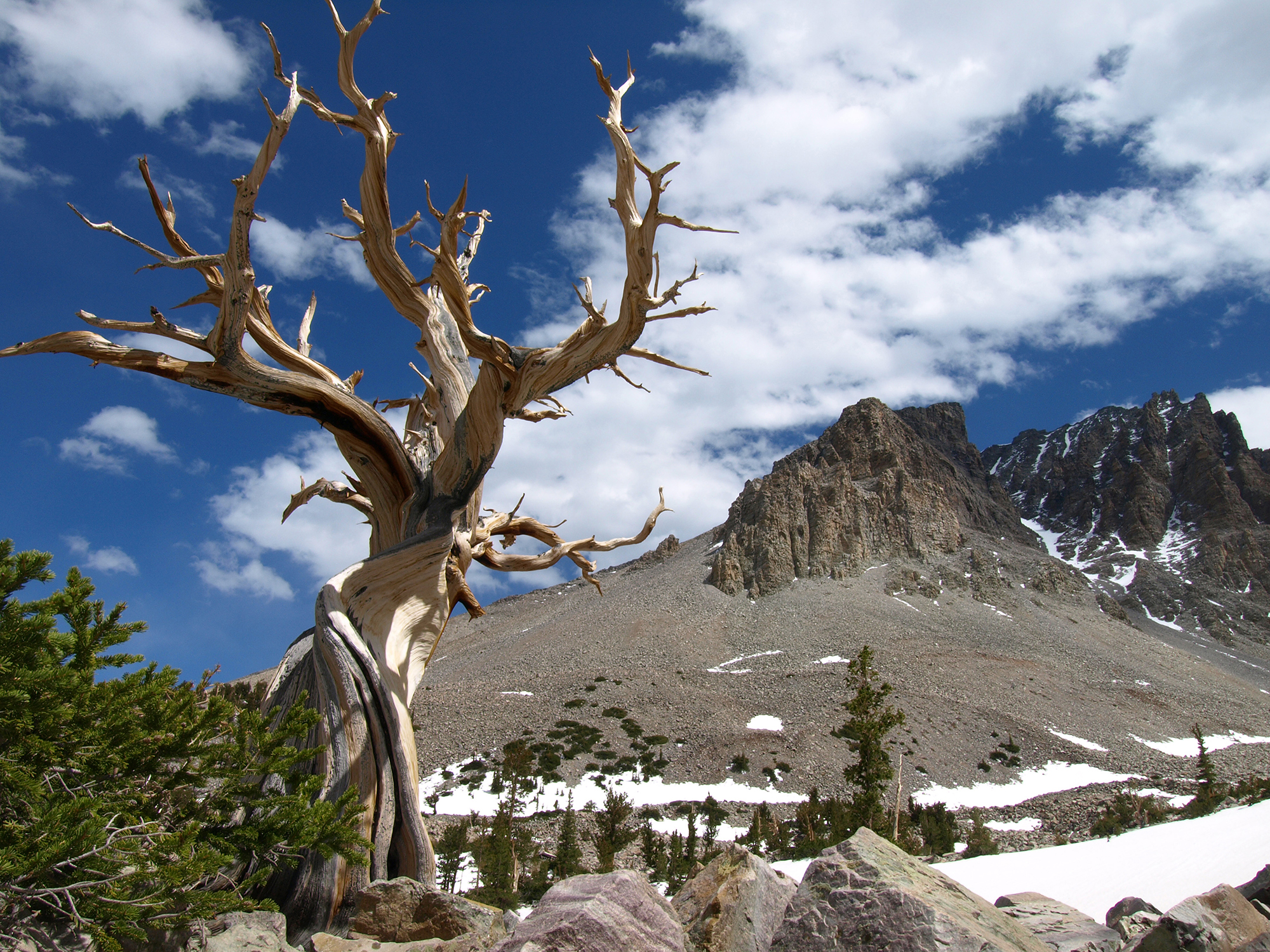 Great Basin National Park Utahcom