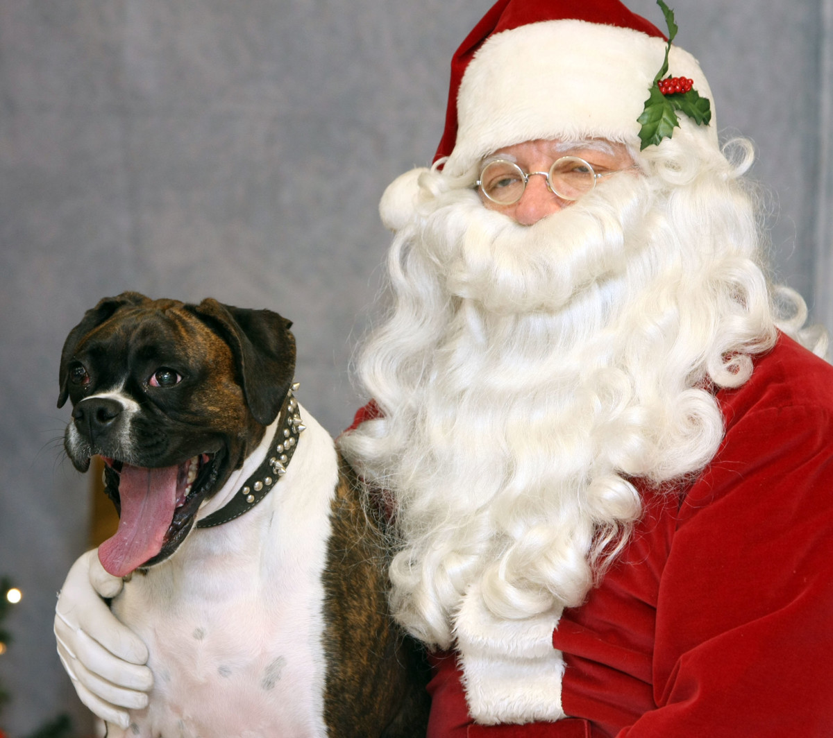 Your Weekend: Santa + your dog = the year\'s best Christmas card ...