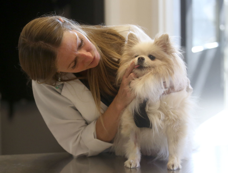 Dr. Kirsten Doub checks on Lucky after Lucky had teeth extractions at Union Park Veterinary Hospital in Murray on Tuesday, Oct. 30, 2018.